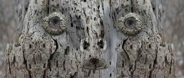 木の加工顔